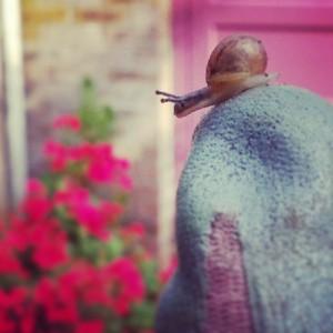 Hello, tiny snail friend!
