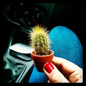 Riding in cars with cacti